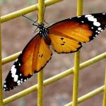 Butterfly I.jpg