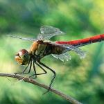 Dragonfly I.jpg