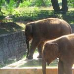 Elephants I.jpg